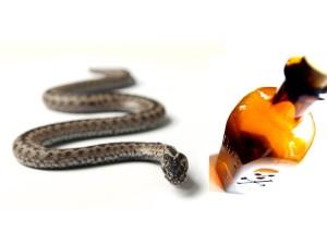 Snake Oil 3