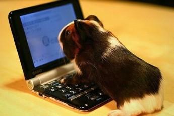 Guinea Pig Experiments